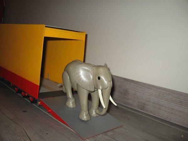 Bonsoir, voici quelques clichés de la semi-remorque destinée aux éléphants qui sont 4 !!!
