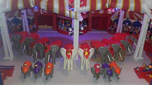 Le troupeau d'éléphants prêt pour le tournage !!!