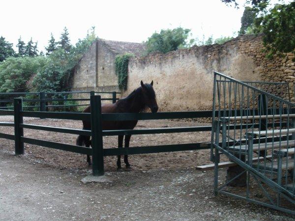 Visite annuelle au Parc Alexis Gruss à Piolenc (Vaucluse) !!! 11