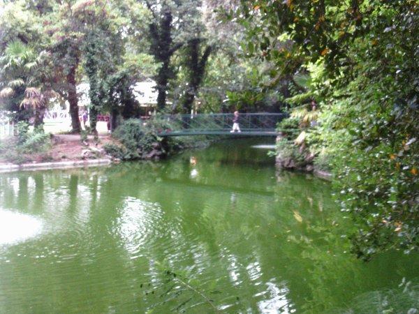 Visite annuelle au Parc Alexis Gruss à Piolenc (Vaucluse) !!! 14