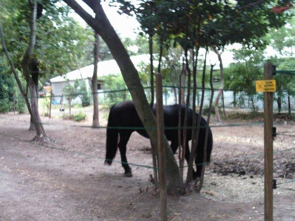 Visite annuelle au Parc Alexis Gruss à Piolenc (Vaucluse) !!! 15 fin