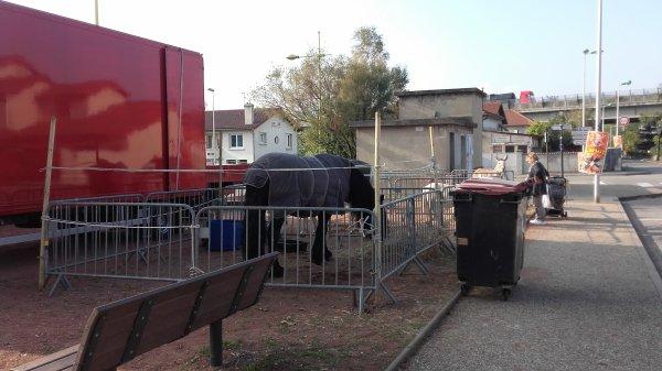 Cirque Caplot dirigé par la famille Sammy Caplot ! Chasse sur Rhône du 20 au 24 octobre 2018 !!! n°2