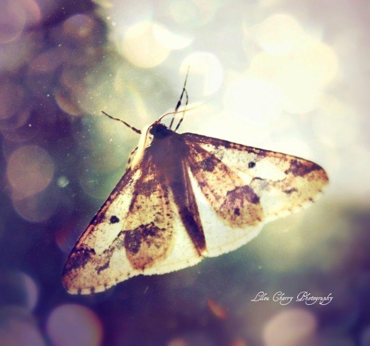 Butterflies Scream