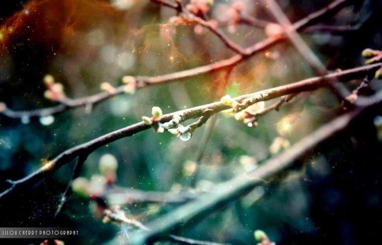 Spring Nebula