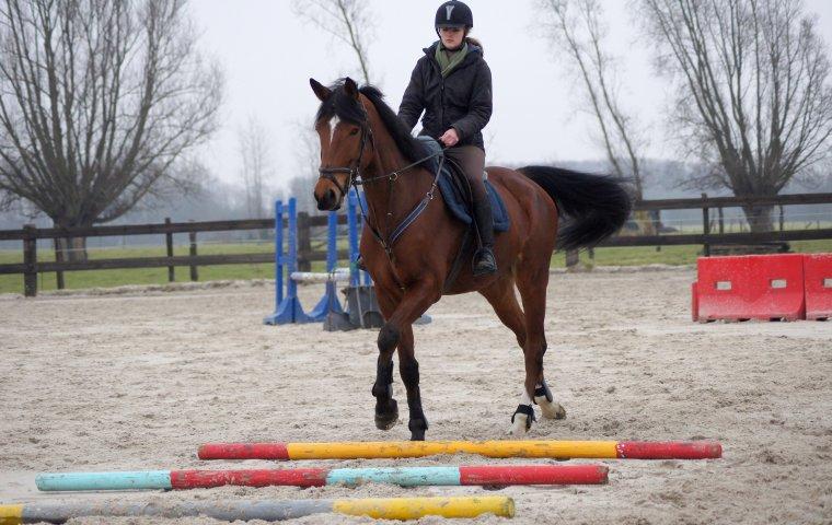 Etre heureux à cheval, c'est être entre terre et ciel, à une hauteur qui n'existe pas.