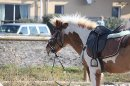 Photo de Poney-Extraordinaire