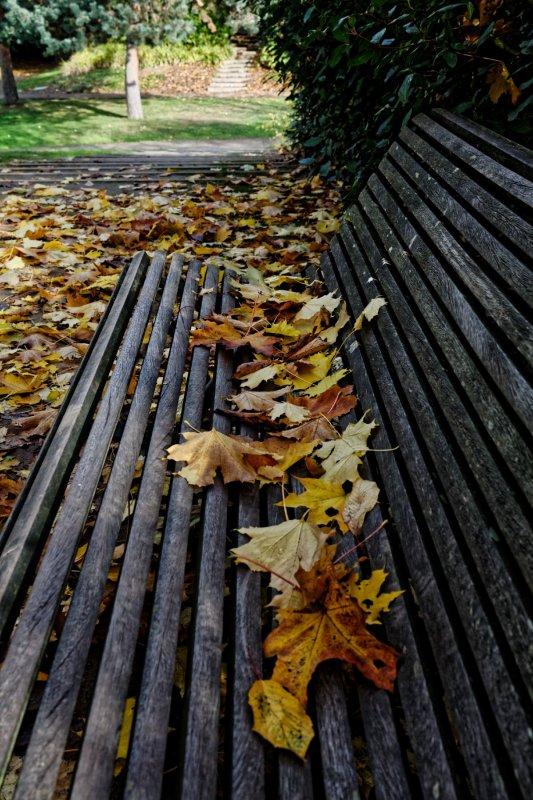 Les feuilles tombent, l'Automne est bien là...