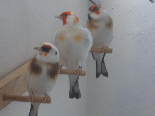 3 mâles de 2013