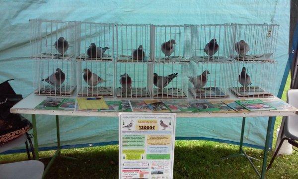 pigeon en expo