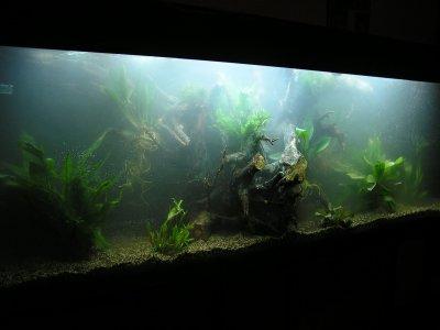 Achat des plantes blog sur un aquarium d amazonie for Achat de plantes sur internet