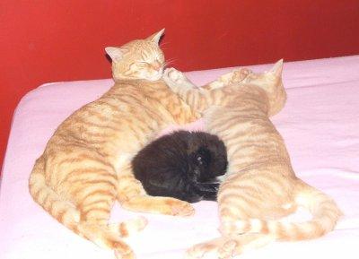 les garde du corps de Feline
