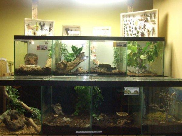 notre coin accueil des reptiles