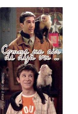 Monkey Marcel