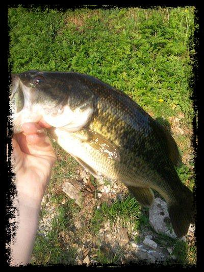 black-bass 34cm