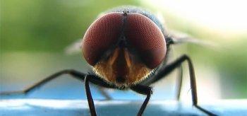 Basta les mouches !