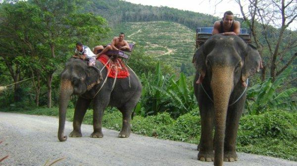 sa fait peur un elephan