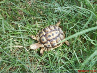 Ma tortue de terre.