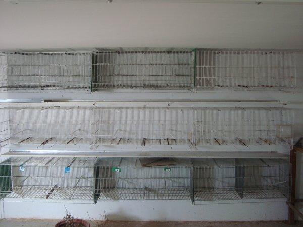 bateria de jaulones para los recien destetados