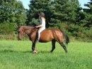 Photo de xx-sensiblement-horse-xx