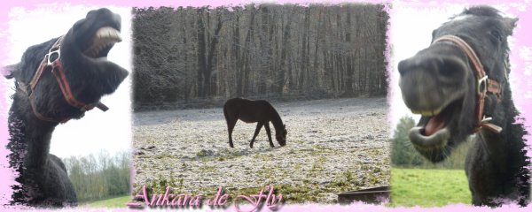 """"""" Vous ne pouvez demander à n'importe qui de devenir votre ami..... le cheval il suffit simplement de le lui demander... mais demandez le lui vraiment."""""""