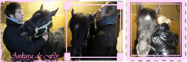 Mon royaume pour un cheval !
