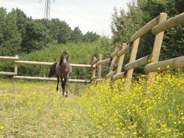 Regarde le ciel, regarde l'herbe, et regarde toi comme si tu étais un cheval. Tu y verras la cruauté de l'Homme sur cette Terre, tout autant que la passion qui l'habite.