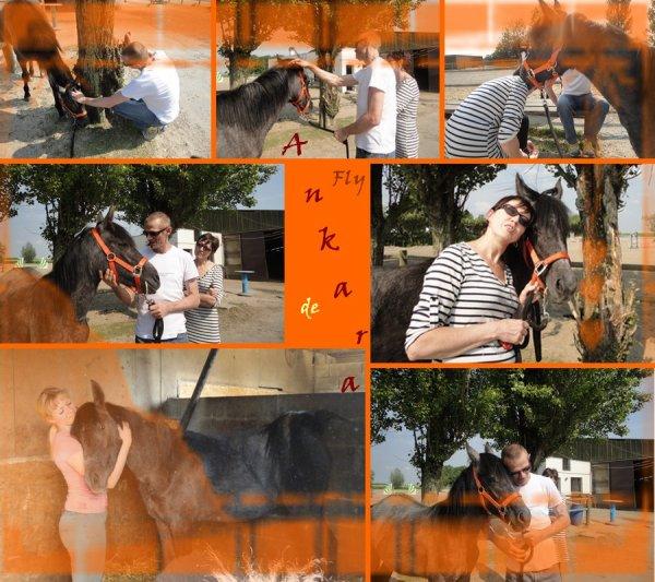 Le coup d'½il du maître vaut pour le cheval un pansement.