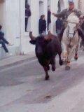 Photo de taureau-passion34