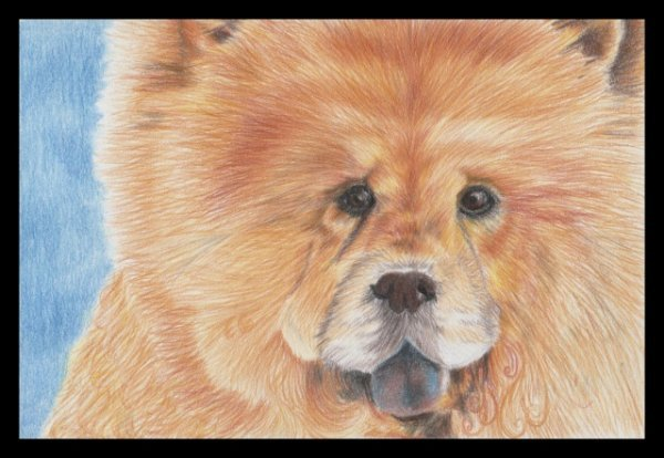 un cadeau de mon amie Christelle, merci pour cette jolie peinture de chow chow