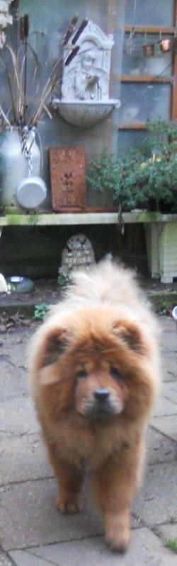 quelques photos des chiens