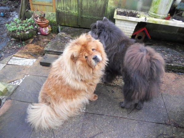 Boubou et Prince
