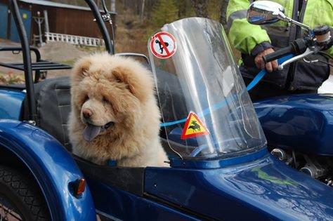 enmenez vos chiens avec vous partout