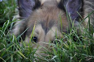 il fait bon dans l'herbe