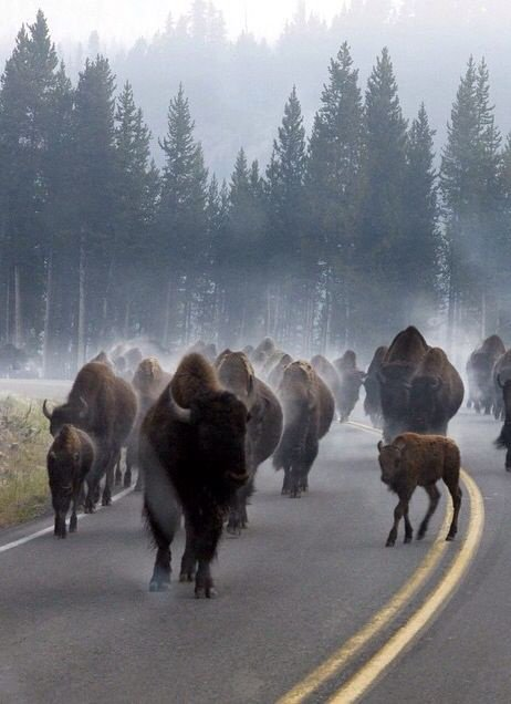 attention, bison futé a dit routes surchargées!