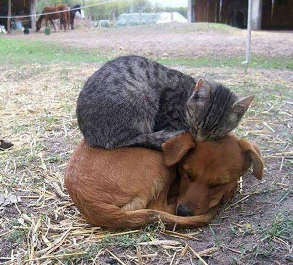 le confort en toute amitié