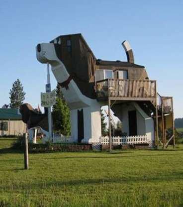 pour les passionnés de chiens!