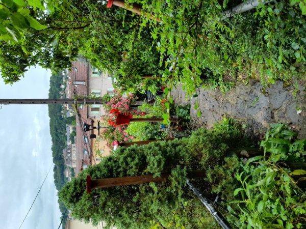 Il pleut tellement que je n'arrive plus à discipliner la végétation !