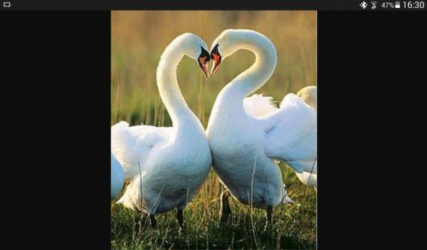 Même eux sont amoureaux