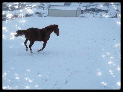 Les loulous dans la neige...♥