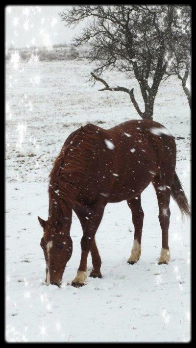 La derniere fois qu'il a neigé ...