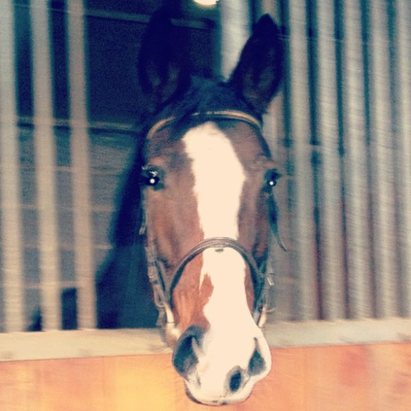 « Il n'y a jamais plus de bonheur que sur le dos d'un cheval »