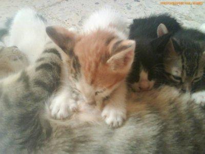 c mes pti chats la!! une famille tres heureuse lol on leur souhaite aussi une bonne annee !!!