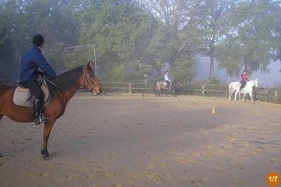 Mordu d'équitation