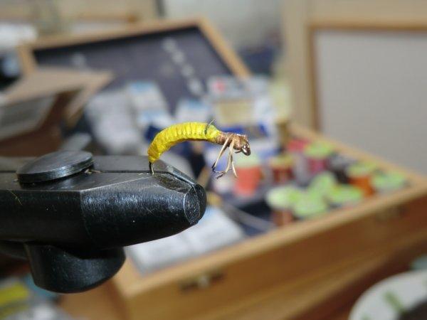 Rhyacophila (nymphe)