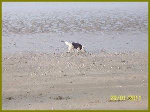 Ma premiére balade à la plage .