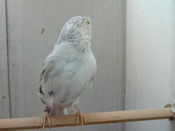 femelle ....femea ..2015