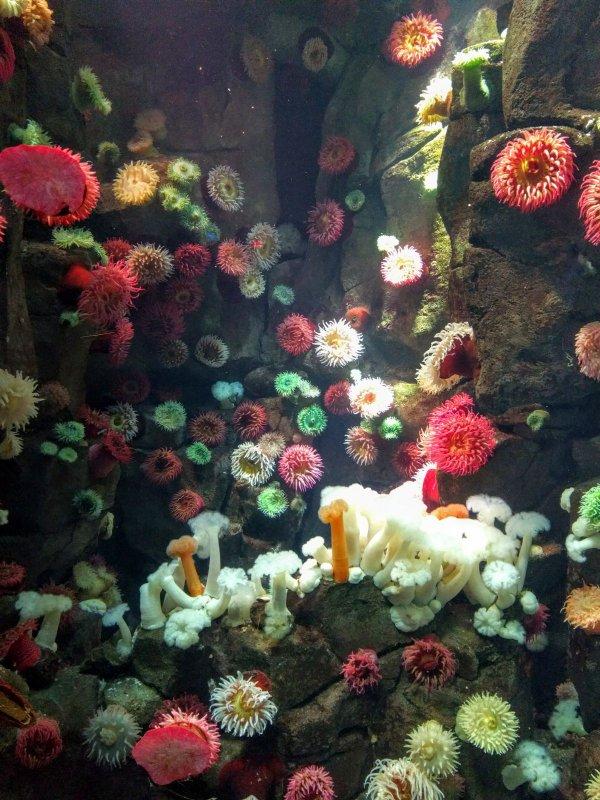 ....Toronto aquarium 4