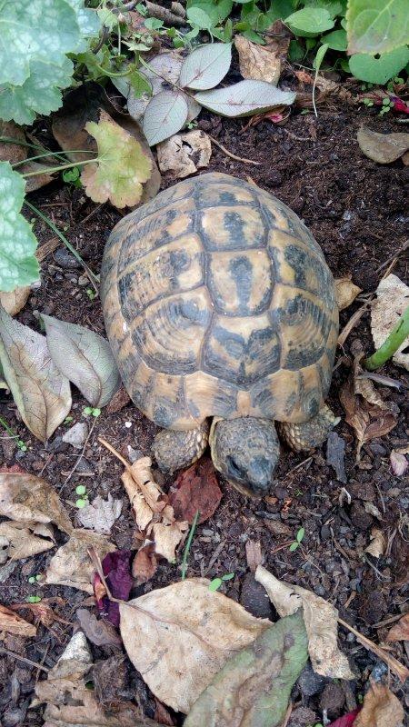 Tortue.....tartaruga