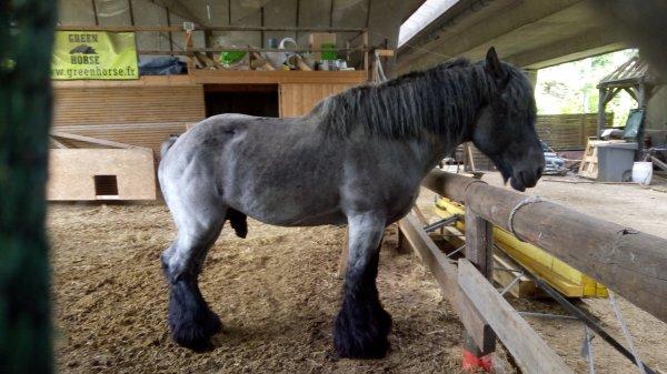 Cheval....cavalo