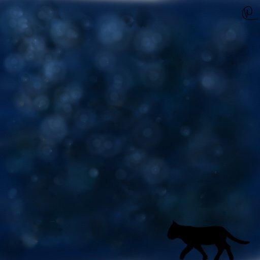La nuit, tous les chats sont gris...ou pas!